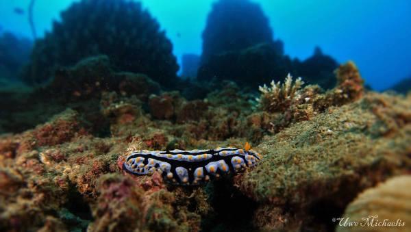 Lemlunay House Reef by Uwe Michaelis