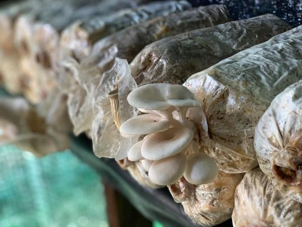 Mushroom Cultivation