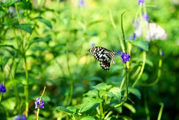 Gasan Butterfly Garden