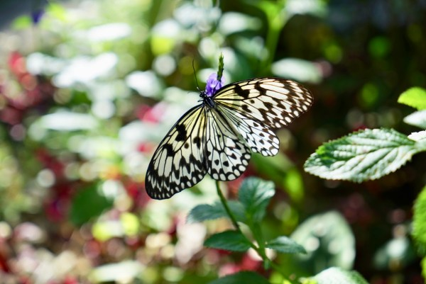 Marinduque Butterfly Garden