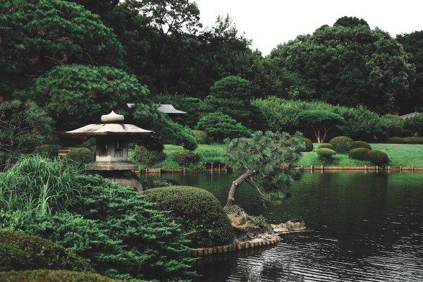 Shinjuku Gyoen National Garden by Thor Alvis via nsplash