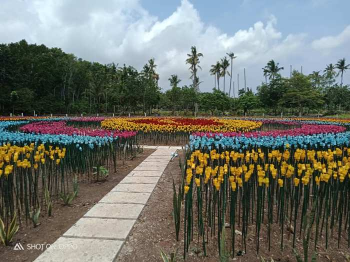Tulip Garden in Lamitan Basilan photo by Cswdo Lamitan