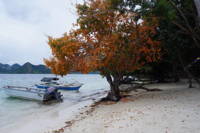 Beach trees at Diatoy Island