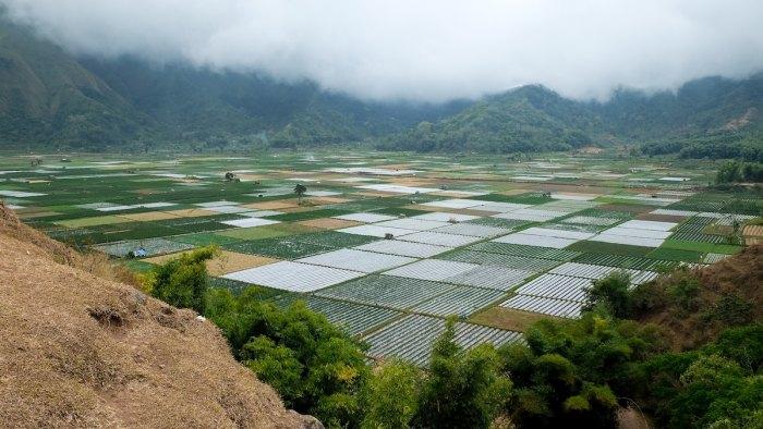 Rice Field in Lombok, Indonesia by @prakosasurya via Unsplash