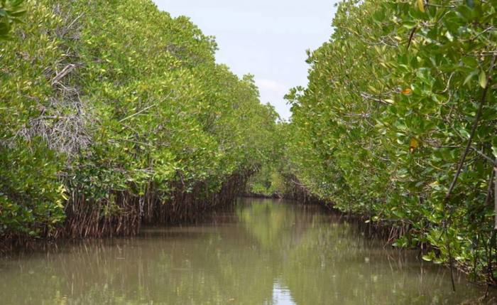 Reserva forestal de manglares de Matang