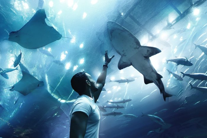 Dubai Aquarium & Underwater Zoo by @sir_moon via Unsplash