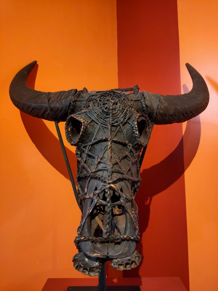 Carabao skull
