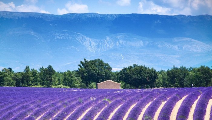 Best Things To Do in Provence