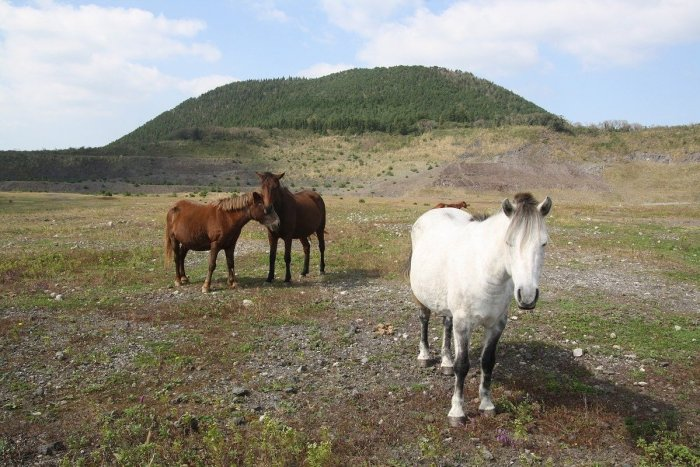Try horseback riding in Jeju Island