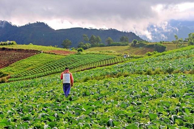 Bauko Mountain Province Agritourism