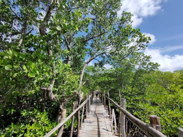 Elevated Bamboo Pathway to Lamanoc Boat dock station