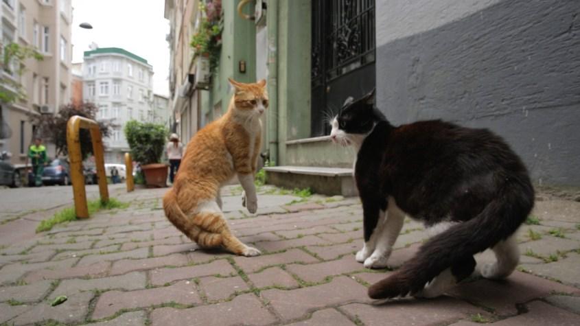 Kedi la città dei gatti-outoutmagazine2.jpg