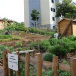 A dura batalha da agricultura familiar urbana