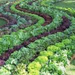 A viabilidade comprovada de Outra Agricultura