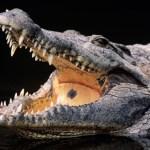 Davos, bilionários e lágrimas de crocodilos