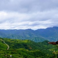 A Trip To The Beautiful Mambilla Plateau Of Taraba