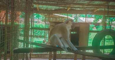 Ogba Zoo and Nature Park, Edo State