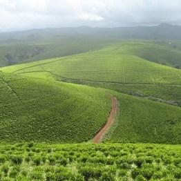 Mambilla Plateau, Taraba State Nigeria