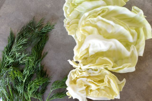 Dill and Cabbage
