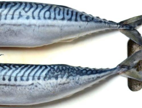 Two Mackerel