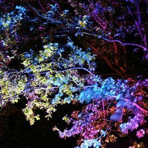iluminación exterior de arboles