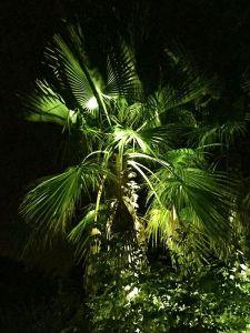 iluminación exterior de árboles