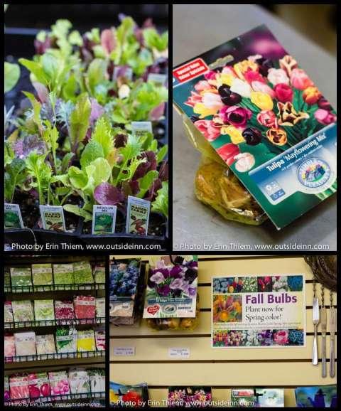Seeds, bulbs and fall veggie starters