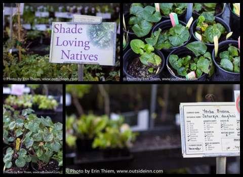 Peaceful Valley Farm and Garden Natives