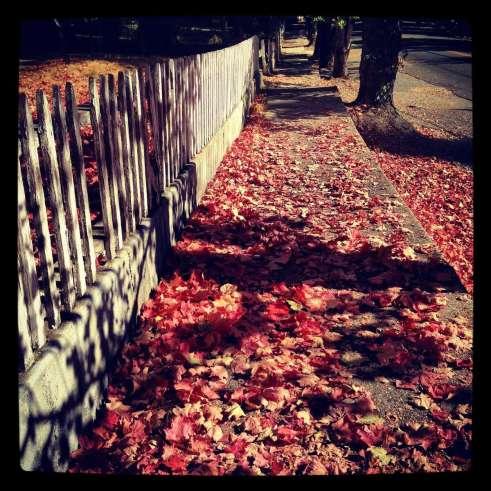Fall colors on Nevada Street, Nevada City