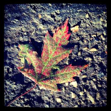 Nevada City leaf