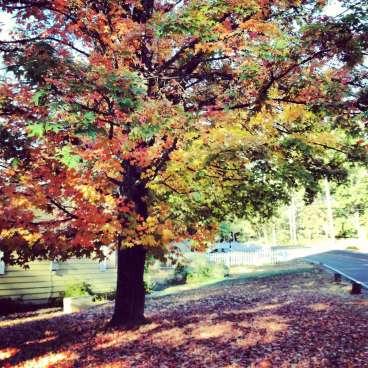 Fall Color in Nevada City, CA