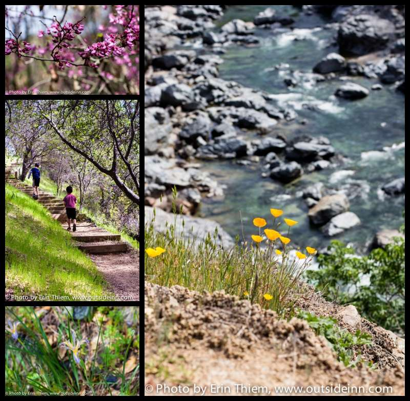 California Wildflowers along South Yuba River