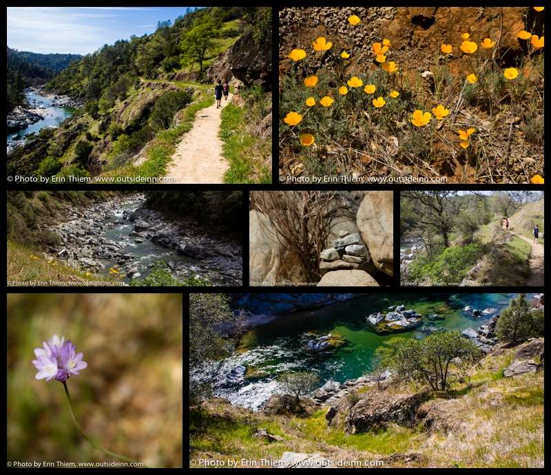 South Yuba River State Park, Bridgeport Wildlowers