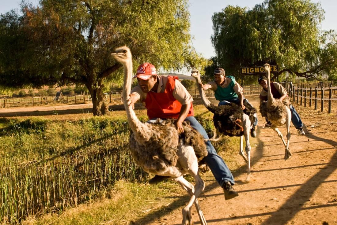 Garden route adventures Ostrich Racing