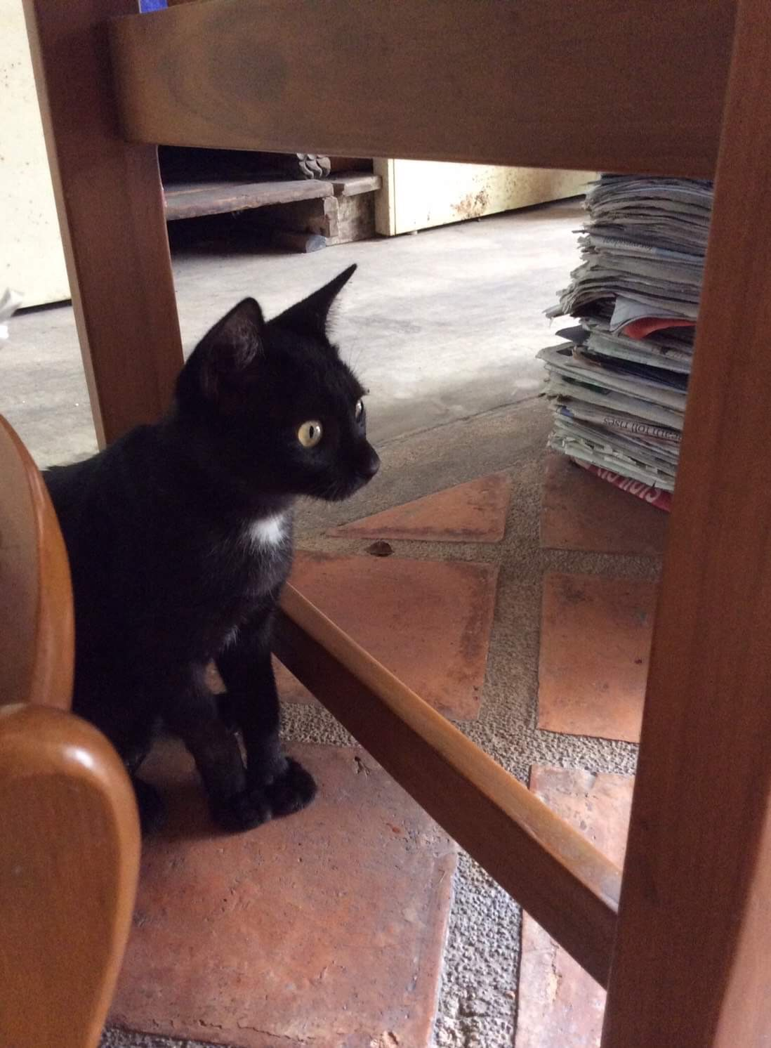 SATAN'S BLACK CAT , LONELY UNDER TABLE 🐱🐈😈😿 ( แมวดำซาตานเหงาอยู่ใต้โต๊ะ 🐱🐈😈😿 )