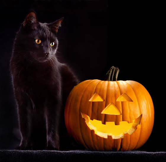 7 อันตรายแอบแฝงสำหรับแมวในวัน HALLOWEEN 🎃👻💀🙀