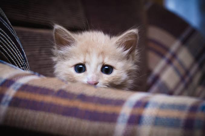 6 สิ่งที่ทำให้แมว หวาดกลัว🐱😿😨😱