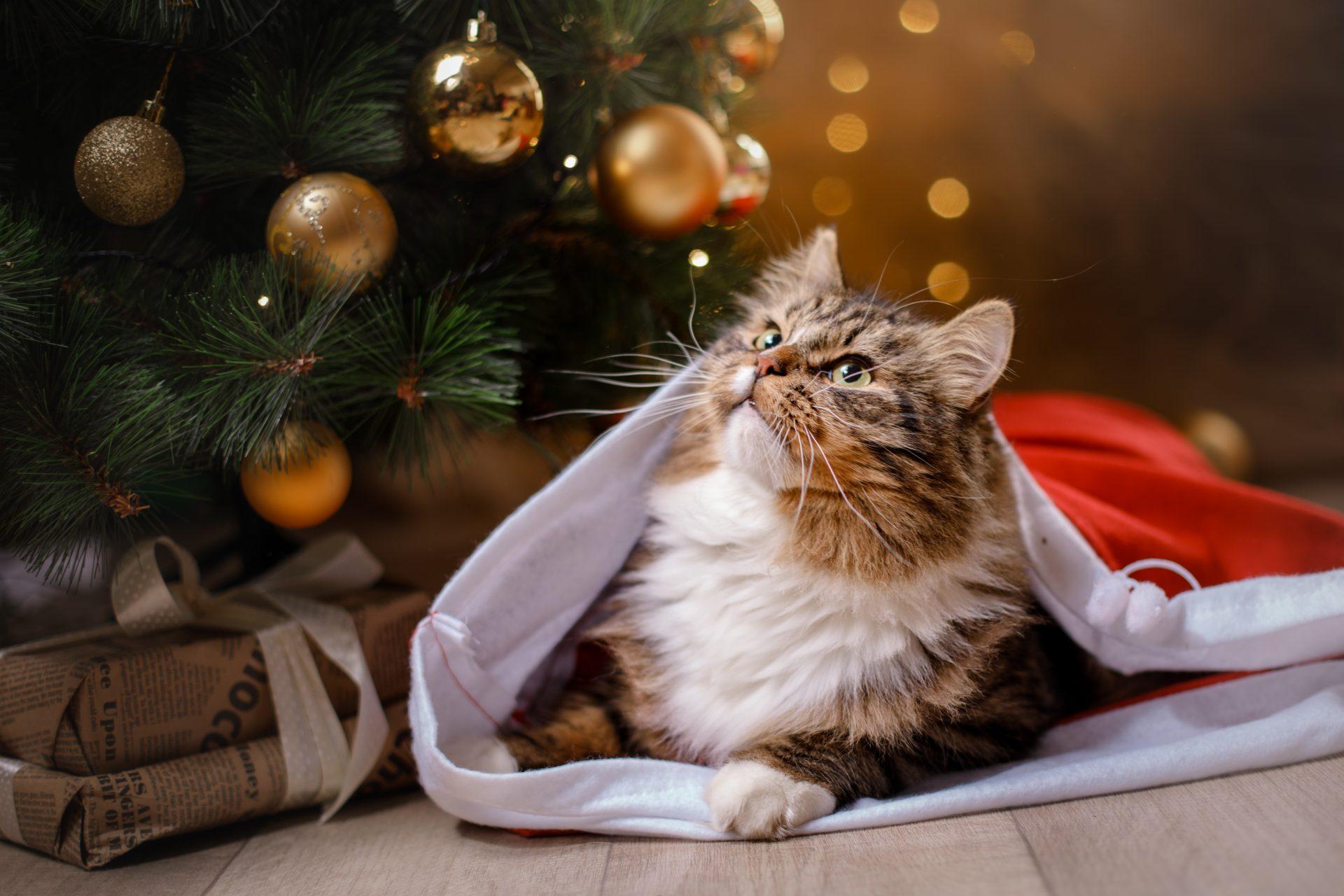 คริสต์มาส นี้จะฉลองอย่างไรให้แมวฟิน ?  🐱🐈🎄☃️🎉🎊