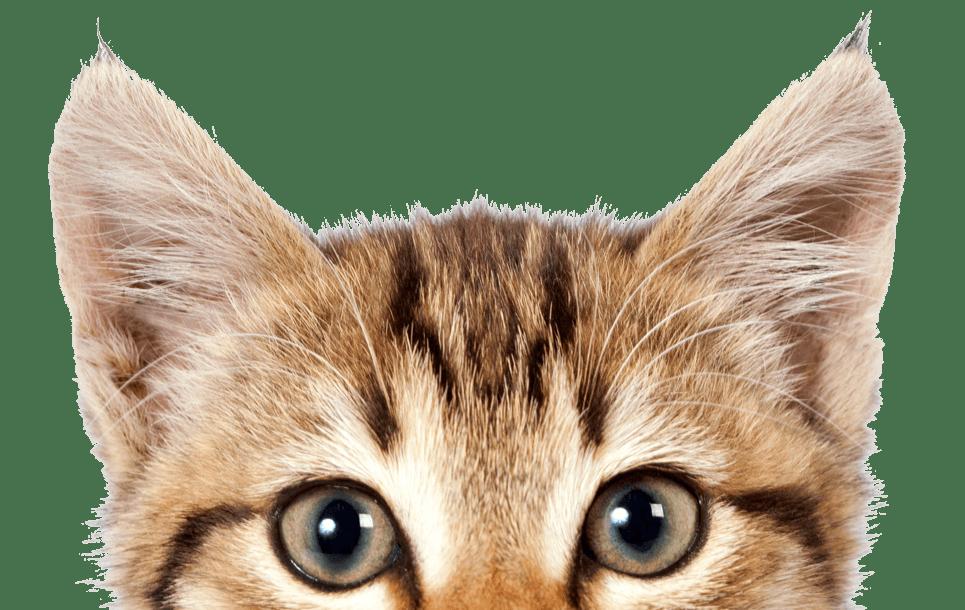 5 เรื่องจริงที่น่าทึ่งเกี่ยวกับ หูแมว 🐱👂🏻😮