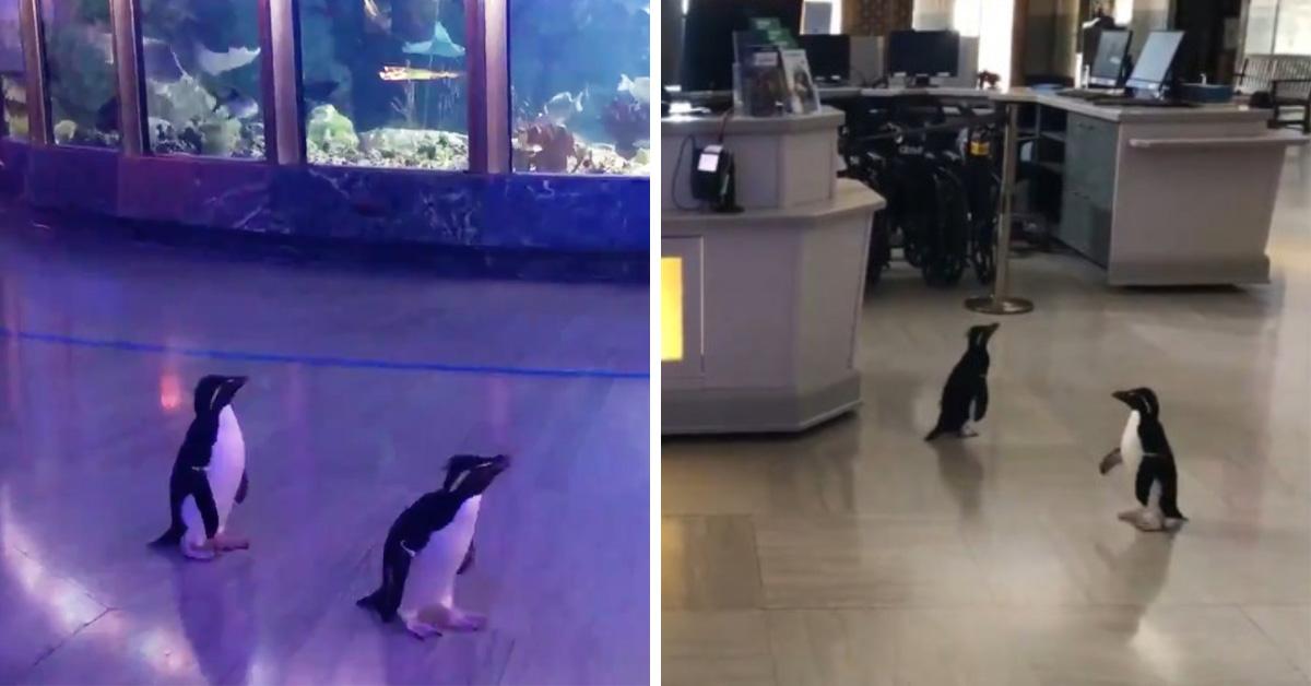 เหล่าเพนกวินน้อย ผจญภัย ในพิพิธภัณฑ์น้ำที่ไร้คนยาม COVID-19 ระบาด 🐧🐠🐟🐬👣