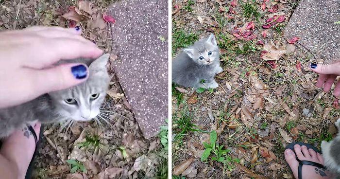 """คำขอร้องของ """" แม่แมว """" ขอให้ช่วยดูแลลูกๆของเธอด้วย 🐱🐈👶🏻😢🤲🏻🙏🏻"""