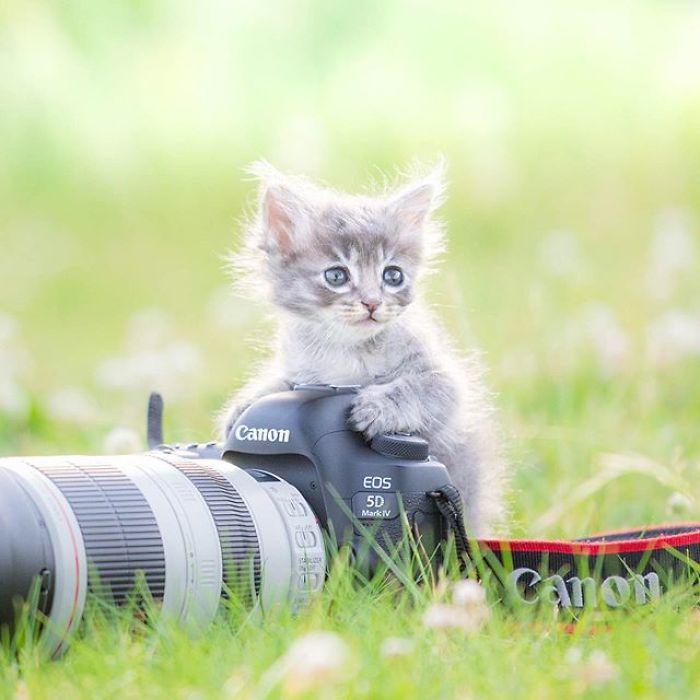 """18 ภาพน่ารักๆน่าเอ็นดูของลูกแมวเล่นกับ """" กล้องถ่ายรูป """" 🐱🐈📷📸"""