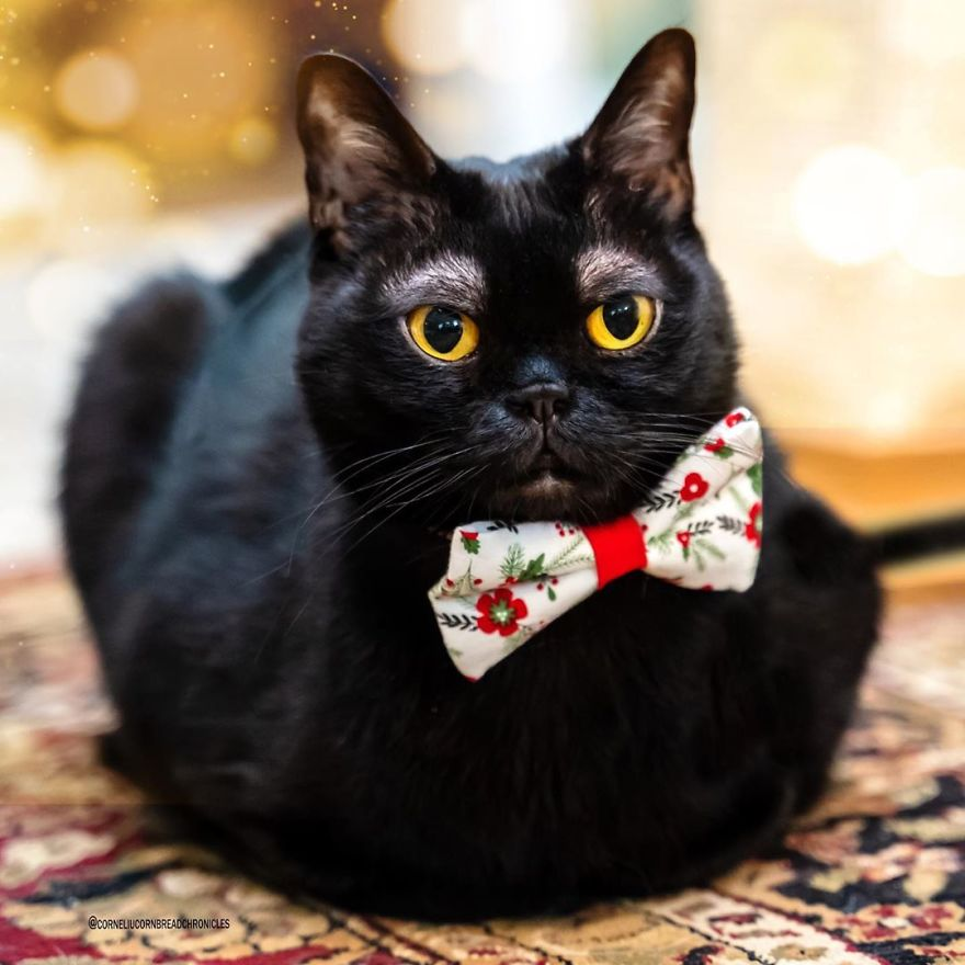 """แมวดำ """" คิ้วขาว """" ผู้ช่วยเยียวยาเจ้าของในยามทุกข์สาหัส 🐱👩🏻🩺💊😘✌🏻👌🏻"""