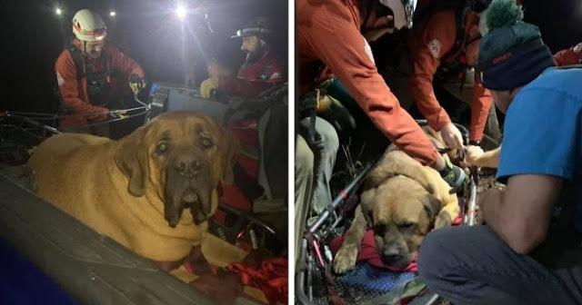 """"""" สุนัขตัวใหญ่ """" ได้รับการช่วยเหลือหลังจากที่ """" ติด """" อยู่บนภูเขาในความมืดและหนาวเย็นหลายชั่วโมง 🐶🐕🏞👨🏻🚒👩🏻🚒🤲🏻👍🏻✌🏻♥️"""
