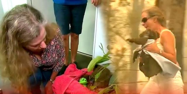 """หญิงสาวออสเตรเลียใจเด็ดขับรถ """" ฝ่าไฟป่า """" เข้าไปช่วยหมีโคอาล่าที่โดนไฟคลอกแล้วพาไปรักษาอย่างปลอดภัย 🐨👩🏻🚘🔥🌲🤲🏻♥️🇦🇺"""