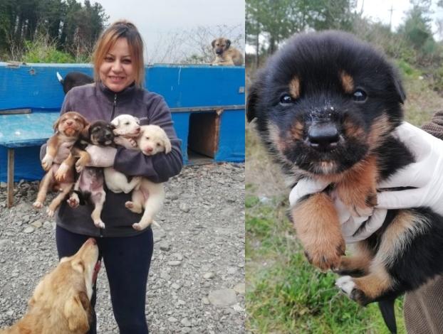 """หญิงสาวผู้ยอมสละทุกสิ่งเพื่อช่วยชีวิตลูกสุนัขที่ถูก """" ทอดทิ้ง """" นับร้อยๆตัว 👩🏻🐶🐕🤲🏻🍖🏠♥️🇹🇷"""