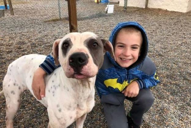 """ฮีโร่น้อยวัย 7 ขวบ ผู้สามารถช่วยสุนัขมากถึง 1,300  ตัว จนได้รับรางวัล """" เด็กยอดเยี่ยมแห่งปี """" 👦🏻🤲🏻🐶🐕👏🏻🎖🏅🏆🇺🇸"""