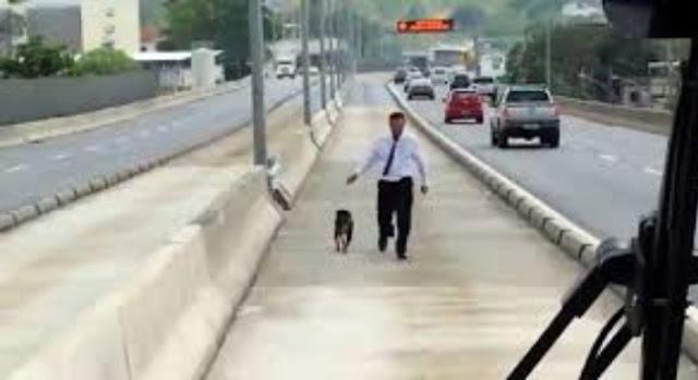 """ผู้โดยสารส่งเสียง """" เชียร์ """" หลังจากที่คนขับหยุดรถเมล์ลงไปช่วยสุนัขที่ติดกลางทางด่วน 🐶🐕🛣👮🏻♂️🚎🚍🤲🏻🤝👏🏻👍🏻♥️🇧🇷"""