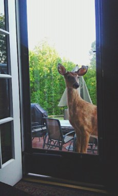 pet deer at back door