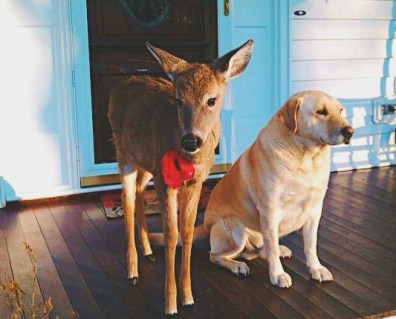 deer and dog friends